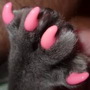 силиконовые колпачки на ногти для кошек и собачек