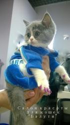 Мягкие коготки - антицарапки для кошек и собак