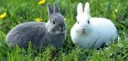 Универсальный комбикорм для кроликов