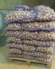 Картофель от 1 тонны с Бесплатной доставкой