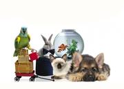 Интернет магазин товаров для животных Зайцы.Онлайн г.Омск